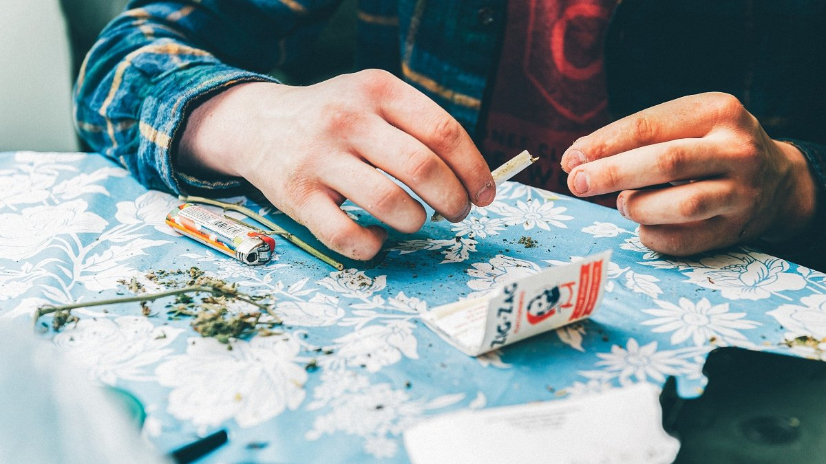 A man packing a marijuana paper joint with grinded weed buds on the table