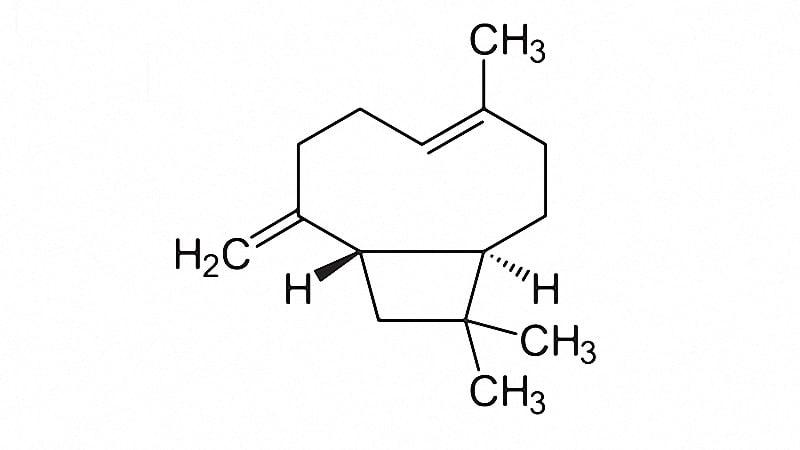 chemistry of Beta-Caryophyllene