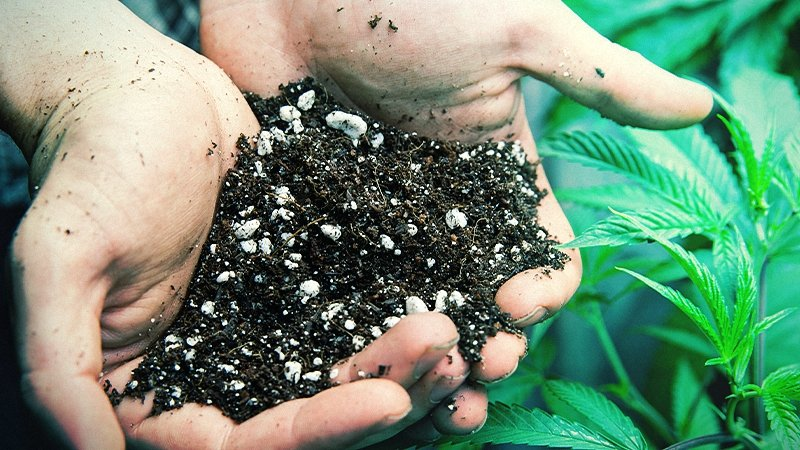 A person holding soil for growing weed with two hands and cannabis leaf in background