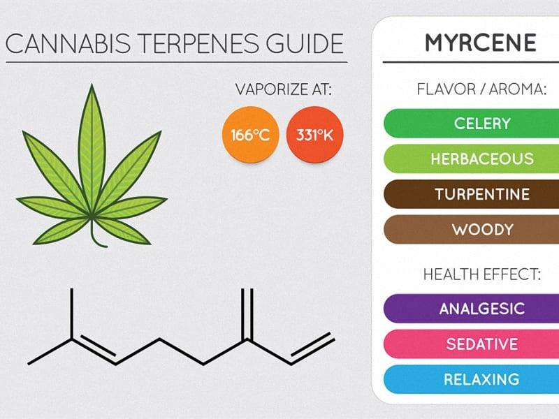 What is myrcene marijuana