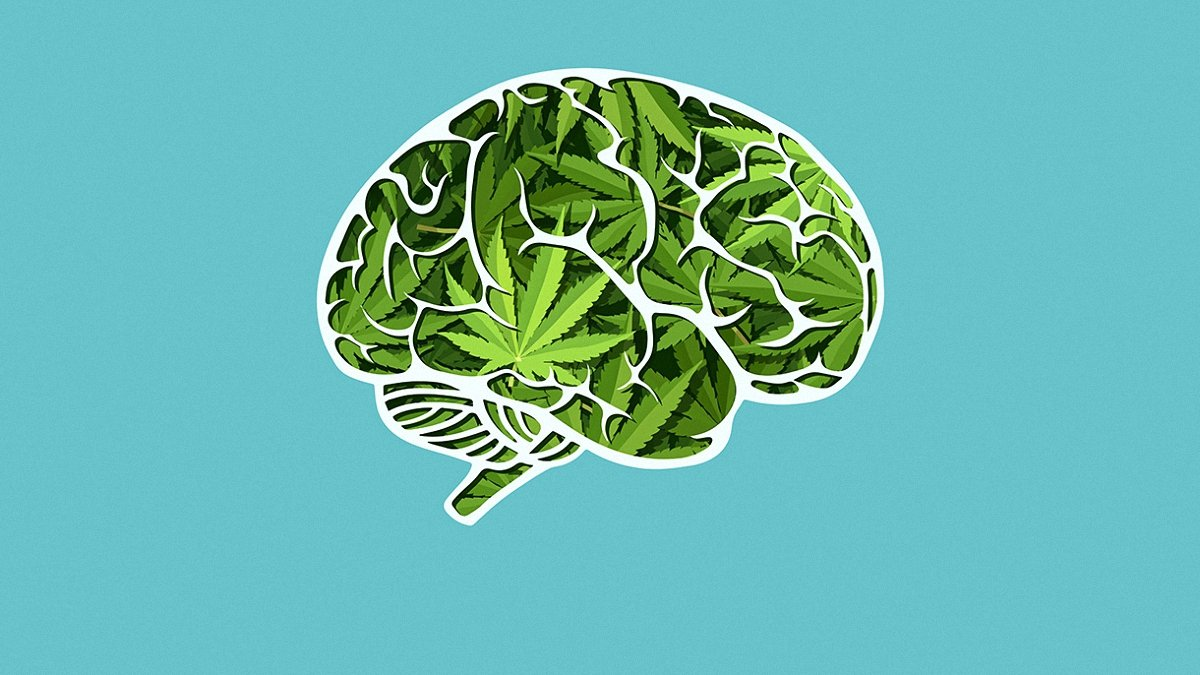 illustration of a brain filled with cannabis leaves