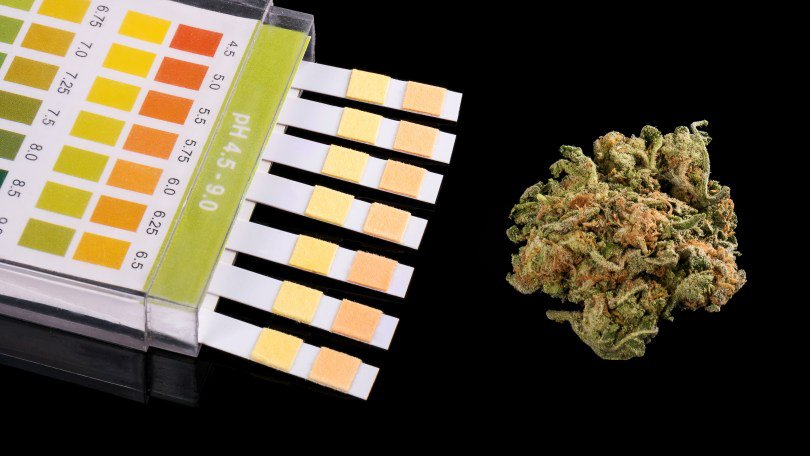 drug testing samples next to a cannabis bud in black background