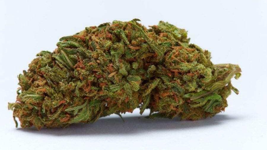 Durban Poison cannabis bud in a white background