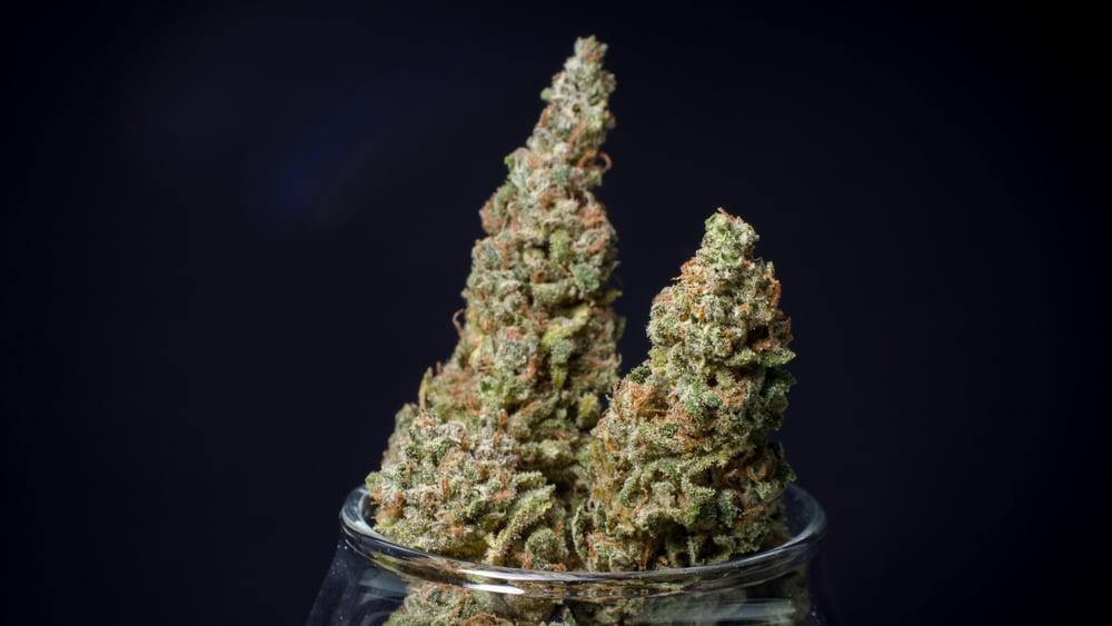 Durban poison cannabis strain in a black background