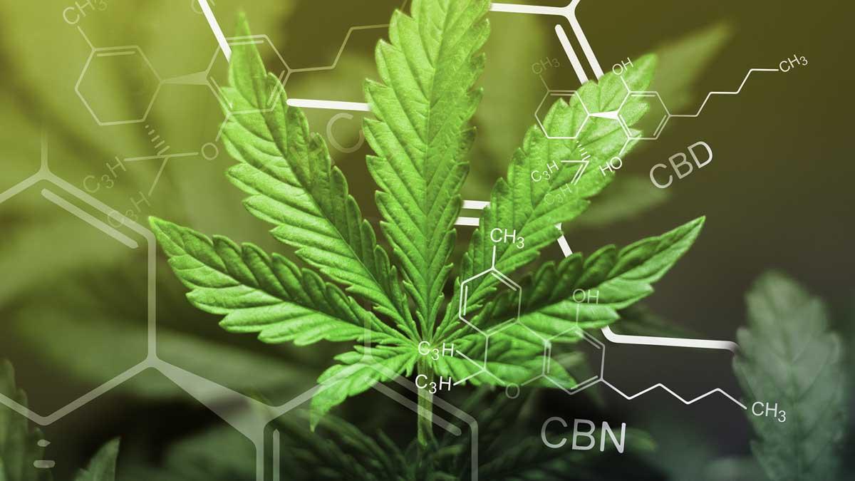A hemp leaf and cbd chemistry symbol