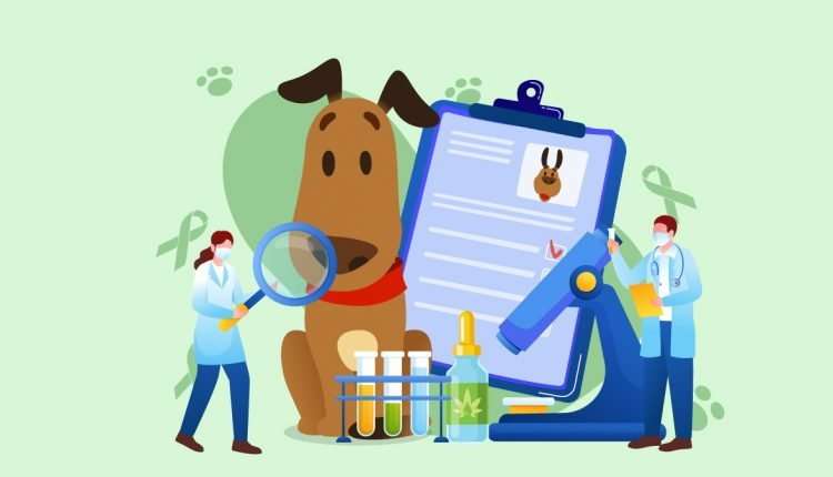Illustration of an Ill Dog with CBD Oil and Doctors Checking Record