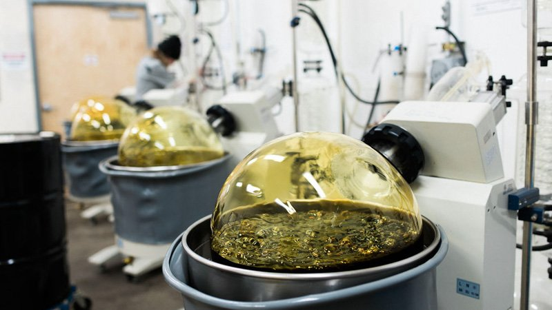 Hemp extraction process to make CBD oil in a lab