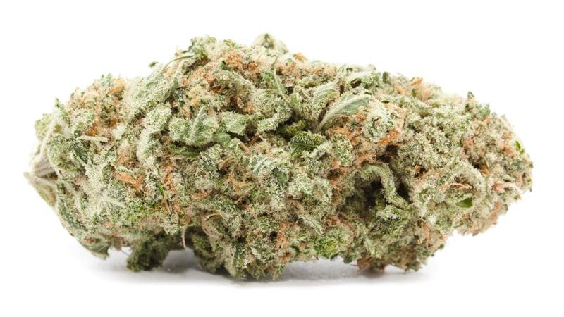 Sunshine Daydream Cannabis Flower on white background